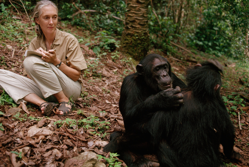 01jane_goodall.ngsversion.1453411022888